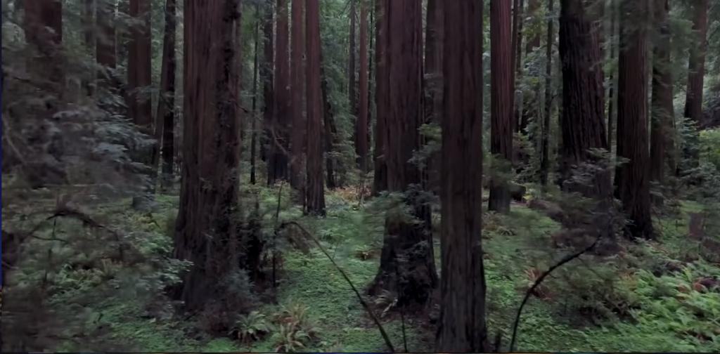 Фоновый звук леса