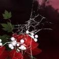 Аватар пользователя Dasha Melnichenko