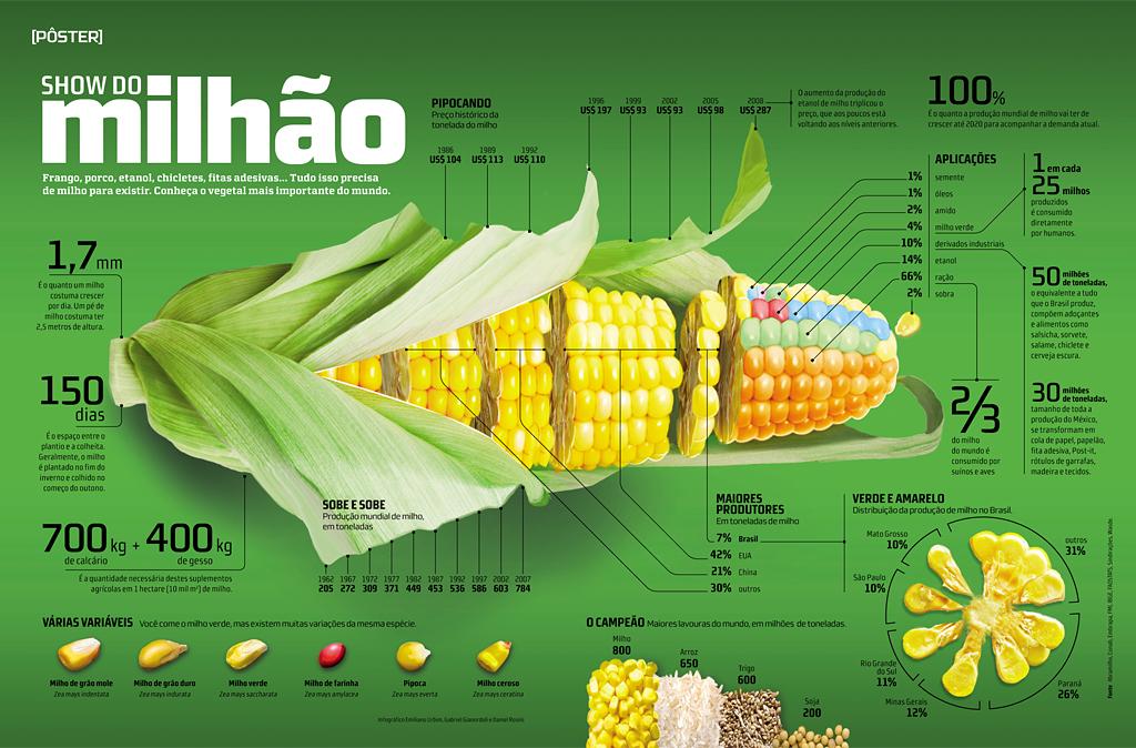 Инфографика про кукурузу