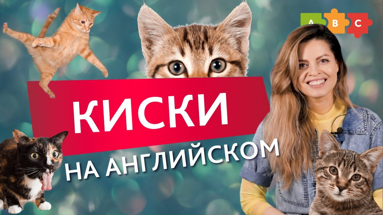 Какое место занимают кошки в английских идиомах??